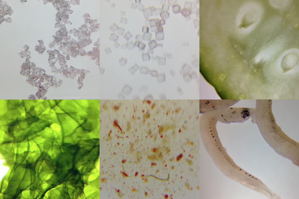 夏休みの自由研究にもまだ間に合う!ー「スマホde顕微鏡」で気軽に観察